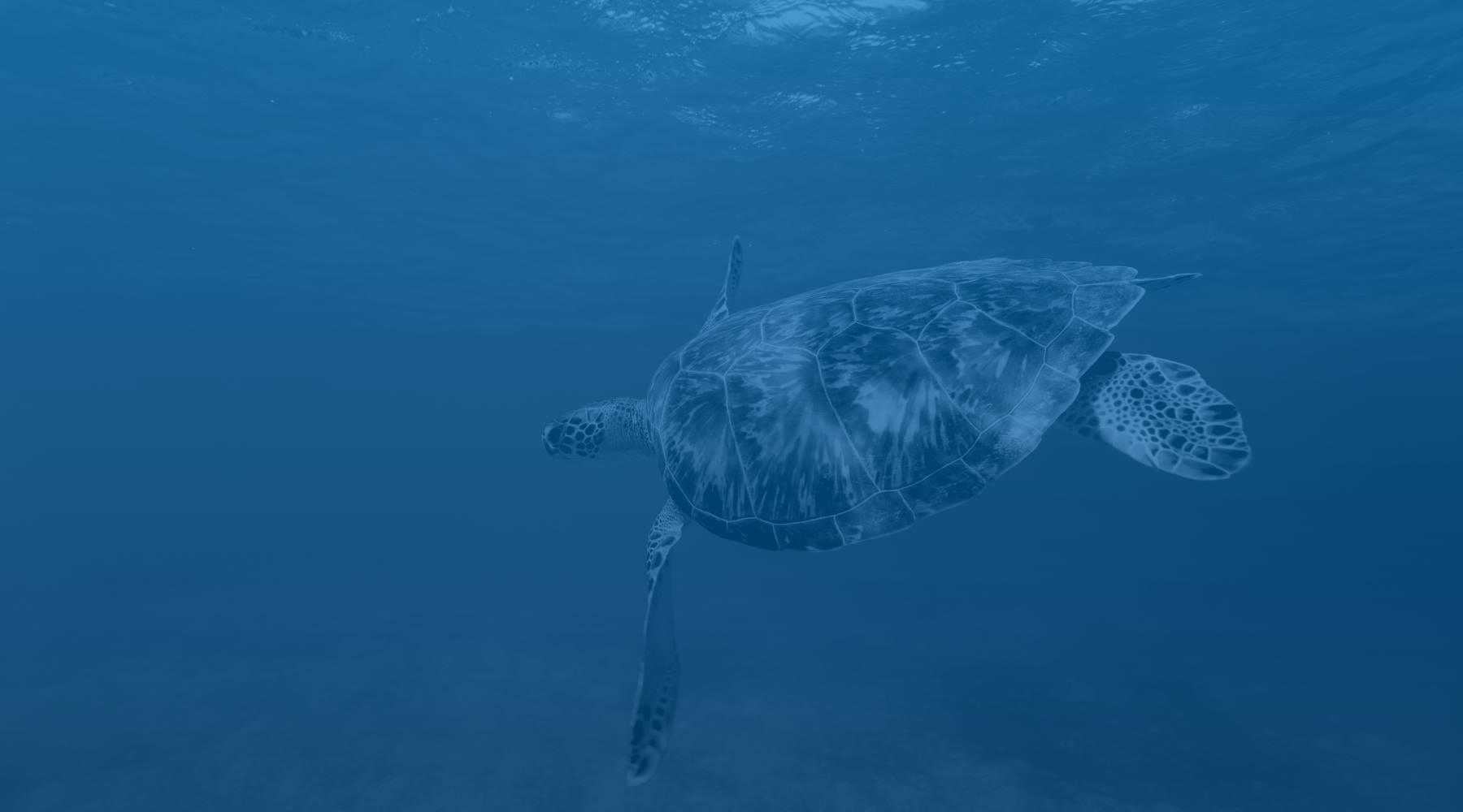 Turtle - Klein Curacao
