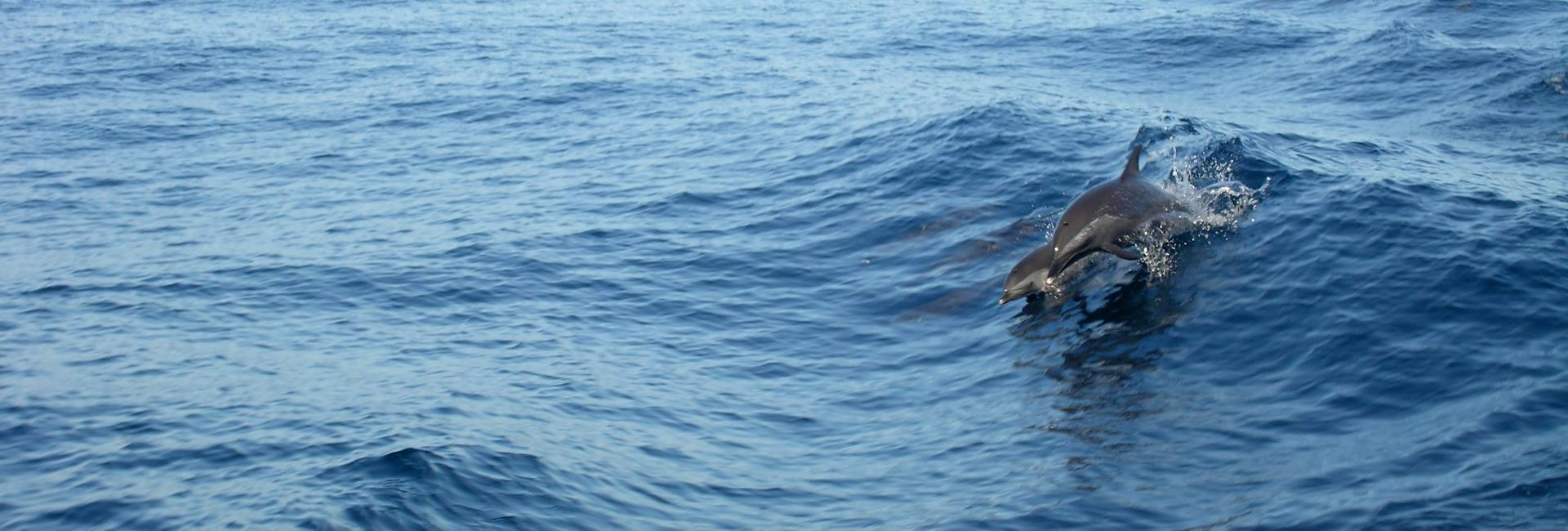 Mother and baby dolphin swimming next to the boat